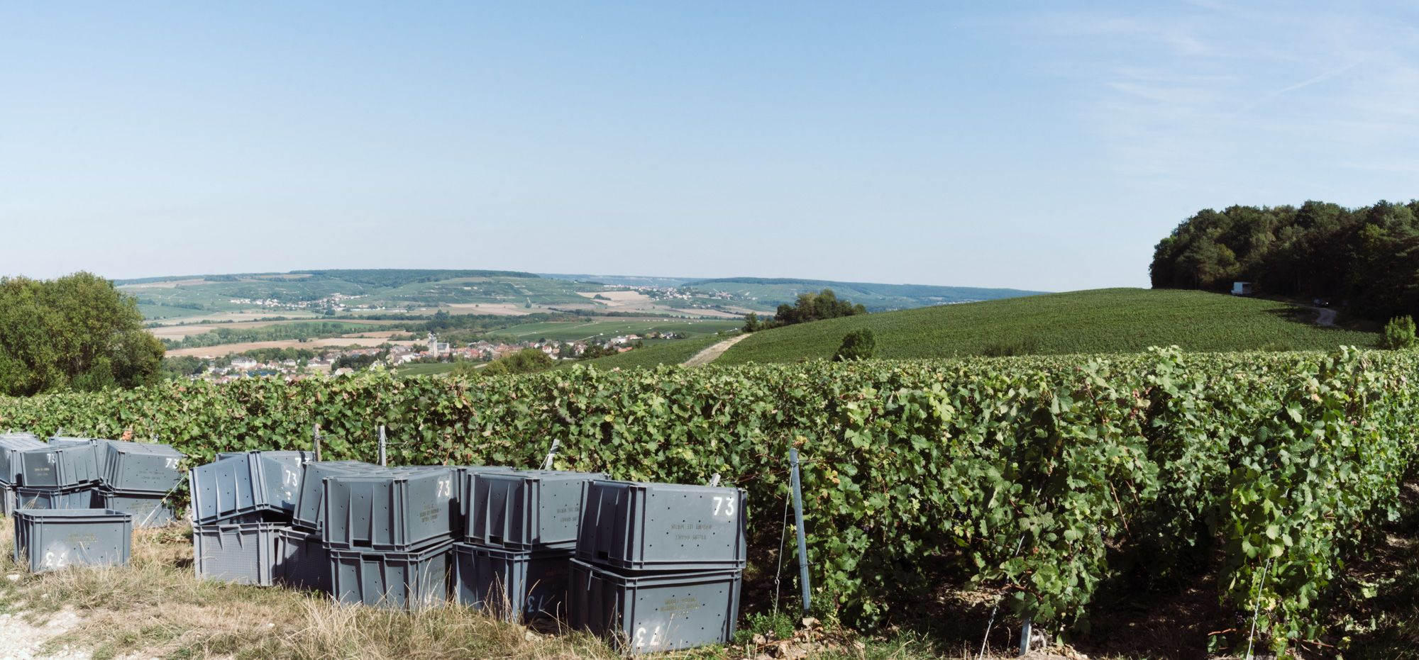 Vendanges 2019 - Vallée de la marne